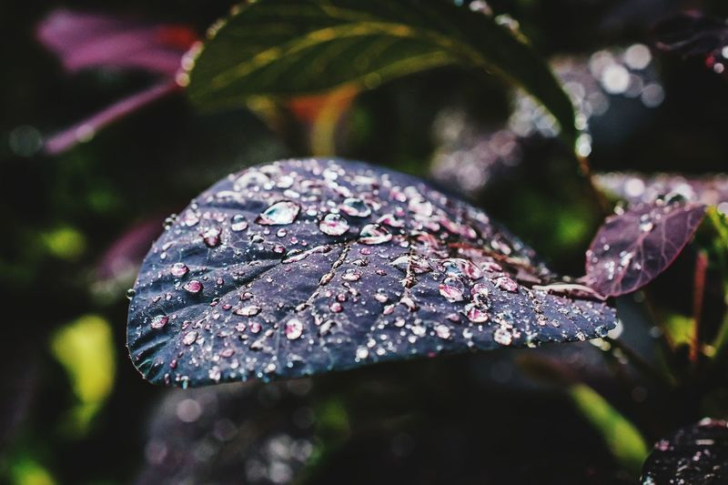 Drop Close-up Water Leaf Focus On Foreground Social Issues Wet Nature No People Day Outdoors Fragility Beauty In NatureNature Beauty In Nature Freshness