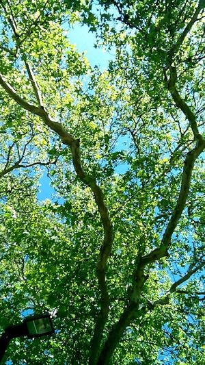 Nature Beauty In Nature Green Color Sky No People Tranquility Day