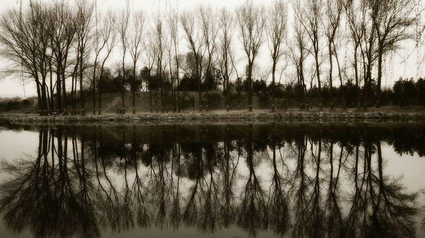 我在你对岸 Water Nature Reflection Tree Lake Growth Reed - Grass Family No People Outdoors Tranquility Sky Swamp Plant Wetland Day Marsh Beauty In Nature Grass Landscape