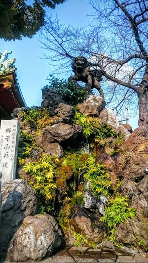 Tokyo Ultimate Tokyo Ultimate Japan Temple Zen Rock Spring In Tokyo Shrine Blue Skies Watch Dog Showcase July