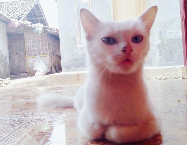 Cute cat EyeEmNewHere Pets Portrait Sitting Domestic Cat Feline Animal Themes Persian Cat  Kitten Maine Coon Cat Animal Eye Ginger Cat Tabby Cat Tabby Cat