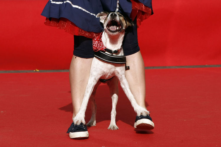 Low section of woman standing on dog for freestyle show