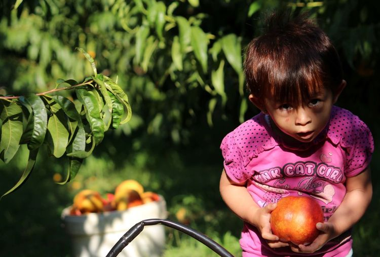peaches nectarines Detail Nectarines Girl Peach Peaches Turkey Mersin Turkey