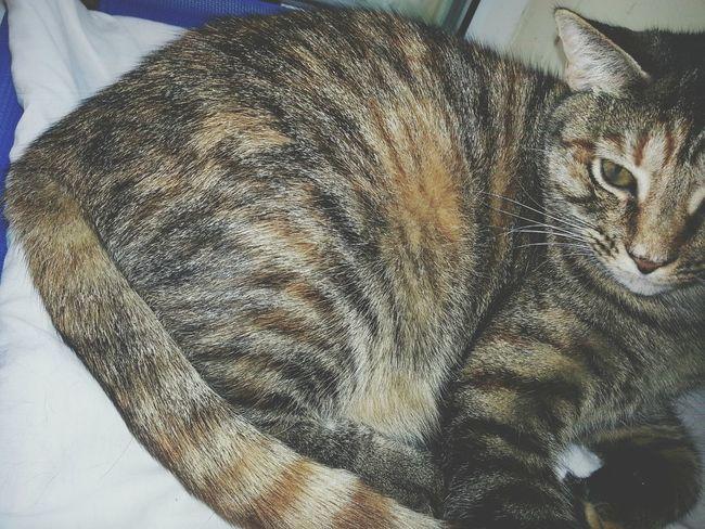 Cat Cats Humanesociety Cutepets