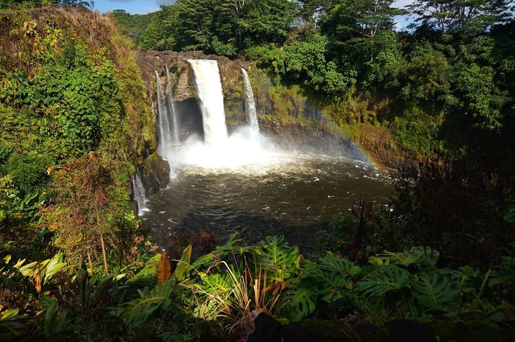 Rainbow Falls - Hilo, Big Island Waterfall Water Scenics Beauty In Nature Nature Plant Tranquil Scene Tranquility Eye4photography  EyeEm Gallery Hawaii Travel Rainbowfalls Bigisland