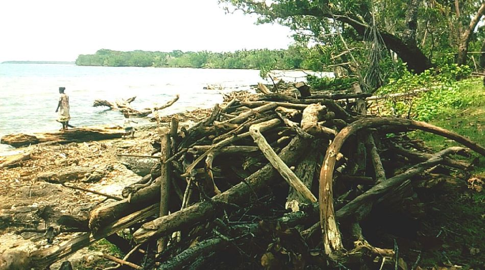 Woodscapes Seascape Wall - Building Feature Tree Water Sea Beach Sky Coast
