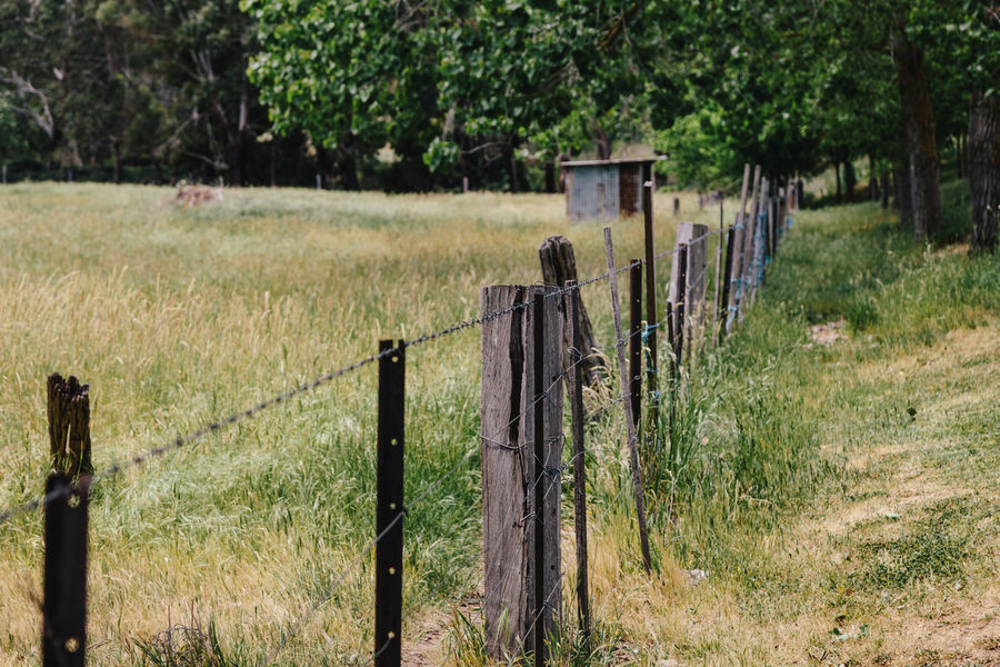 Agriculture Australia Barbed Wire Day Farm Farm Fence Farming Fence Field Focus On Foreground Grass Growth Landscape Nature No People Outdoors Plant Protection Rural Safety Tree Wood - Material Wooden Post