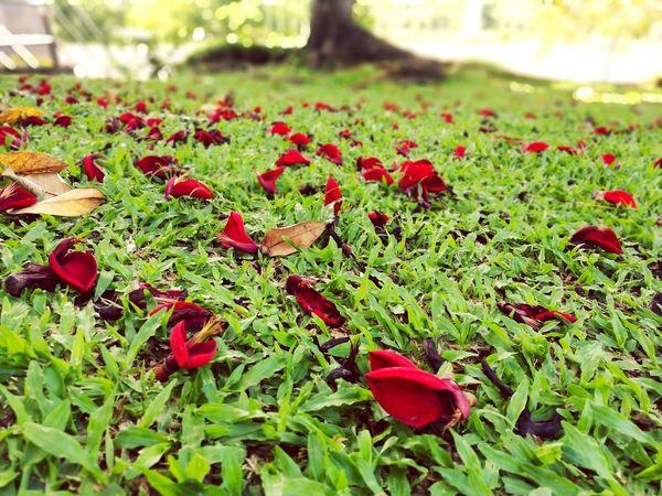 First Eyeem Photo Green Nature Flowers The Great Outdoors - 2017 EyeEm Awards Sabah Kota Kinabalu Malaysia