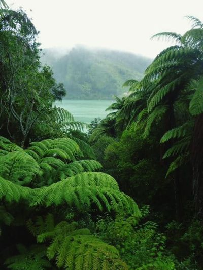 The Great Outdoors With Adobe Newzealandscenary Enjoying Life Travel Hanging Out Newzealandbeauty Lonely Wanderer Taking Photos Green Nature Marlborough Sounds New Zealand Beautiful ♥