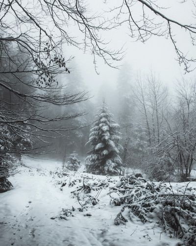 Snow Winter Cold Temperature Tree Plant Beauty In Nature Nature White Color Outdoors Covering Tranquil Scene Frozen Non-urban Scene Day Land Scenics - Nature Environment No People Tranquility Forest