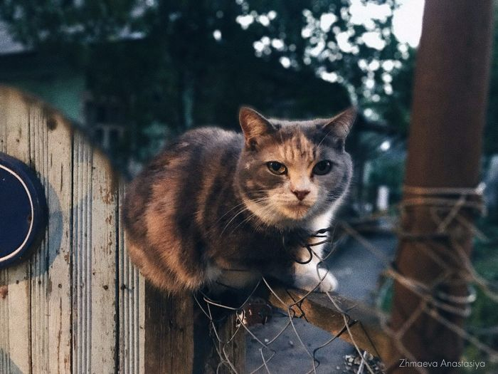 Portrait of cat on wooden outdoors