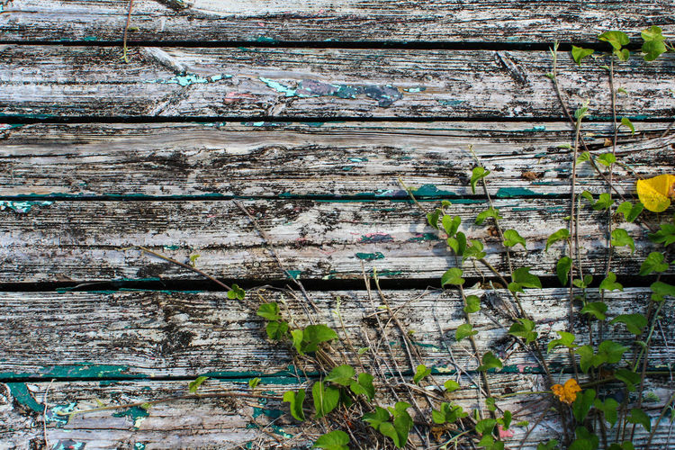 Reclaimed by Nature Abandoned Places Bermuda Backgrounds Built Structure Close-up Day Full Frame Nature Nature Taking Over No People Old Deck Outdoors Overgrown And Beautiful Textured  Wood - Material Worn Paint The Week On EyeEm