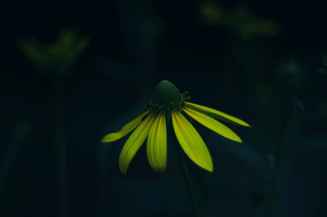 flower, fragility, plant, petal, green color, growth, no people, nature, beauty in nature, flower head, close-up, freshness, day, leaf, blooming, outdoors