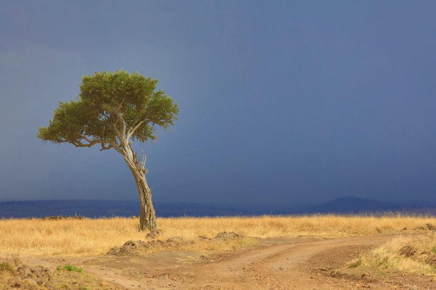 Maasai Mara, Kenya Africa Blue Dramatic Landscape Dramatic Lighting Dramatic Sky Endlessness Kenya Landscape Lonely Tree Maasai Mara Minimalism National Parks Kenya On The Road Again Scenics Single Tree Tranquility Tree Wideness
