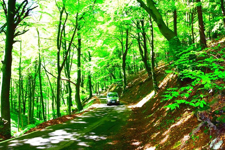 """Simply going"" . Sacred Mount (Sacro Monte) , Varese - Lombardy, Italy. Mountain Forest Going Car In Nature Cars Travel Destinations Travel Fagus Fagus Sylvatica Varese Harmony Green Color Silence Humannature Nature Tranquility Lifestyles Llifestyle Photography Nature Photography Nikon Nikon D3300 Nikkor Nikkor18105"