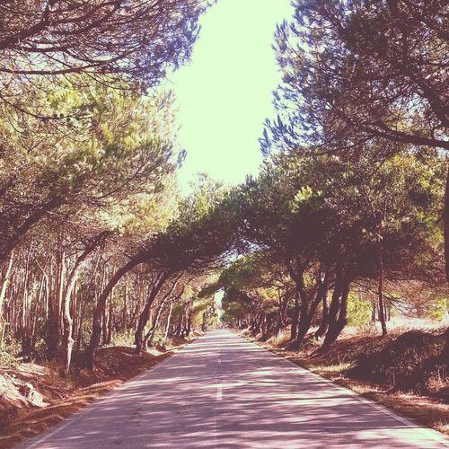 Endless Road Taking Photos Portugaloteuolhar Simplicity Vintage