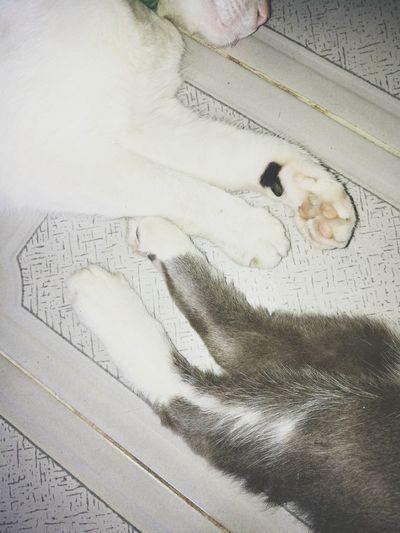 a dormir Dog