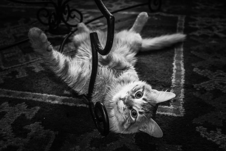 This Moment Animal Themes One Animal Domestic Animals Cat No People Keep Calm And Shoot A Foto 📷 Diver El Masso Hello World Hello World ✌ The Week Of Eyeem 30 EyeEmBestPics Blackandwhitephotography Best Friends ❤ Monochrome Photography