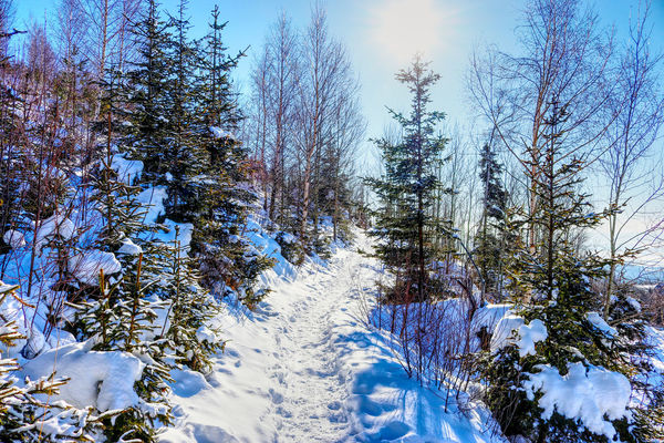 EyeEm Best Shots EyeEm Nature Lover EyeEm Selects EyeEm Gallery Slowakia Beauty In Nature Clear Sky Cold Cold Temperature Day Forest Growth Landscape Nature No People Outdoors Scenics Sky Snow Sunlight Słowacja Tranquil Scene Tranquility Tree Winter