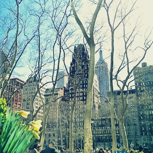 Bryant Park NYC Spring Flowers Spring Time Daffodils In The Sun NYC LIFE ♥