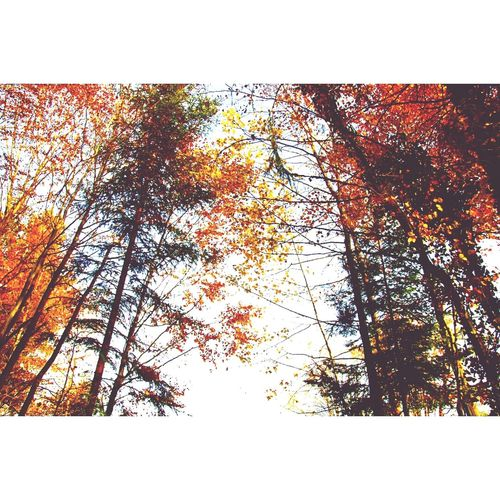 Autumn Colors Instagramers #p3top #tagstagram #mostdeserving #ig_fotogramers #igworldclub #germany #chiquesnourtemo #ig_portugal_ #igrecommend #mst_photooftheday #world_shotz #igersportugal #arteemfoco #faded_portugal #vscocam Vsco Vscogood