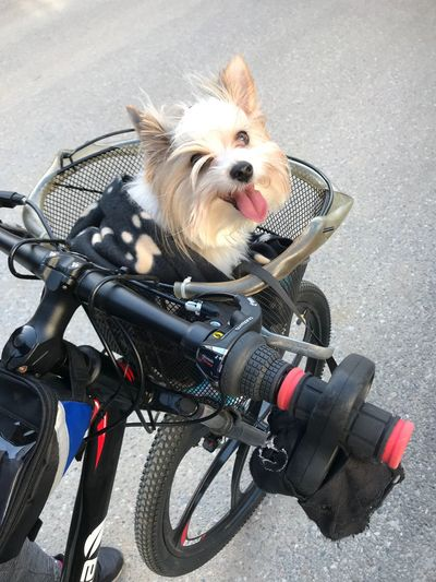 Happy dog 🐕 😍😊 Free Time Love Love Dog Canine Transportation Dog One Animal Pets Domestic Mammal Animal Themes Land Vehicle Bicycle Domestic Animals Animal Mode Of Transportation Vertebrate Bicycle Basket Basket High Angle View Road No People Day