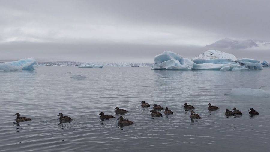 Scenic View Of Jokulsarlon With Ducks And Iceberg Against Cloudy Sky