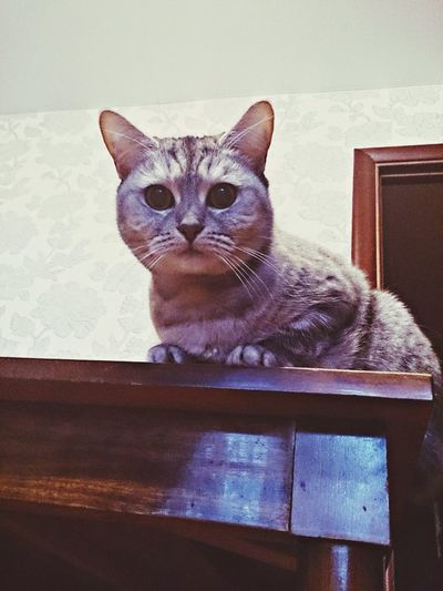 Hi! I'm Just A Cat! Catcatcat