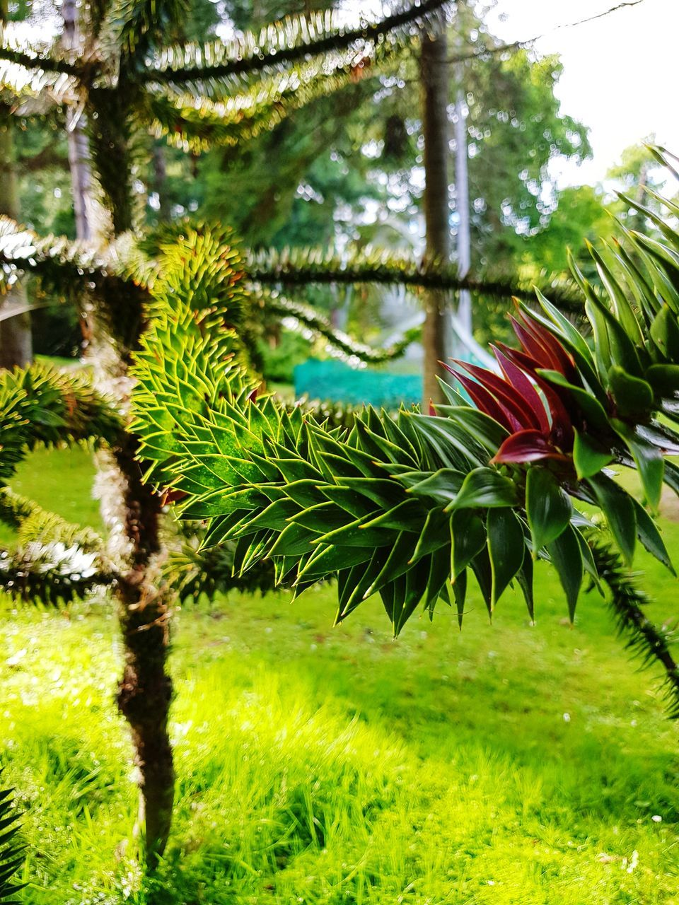 green color, nature, growth, no people, beauty in nature, tree, day, grass, plant, outdoors, close-up, flower, freshness