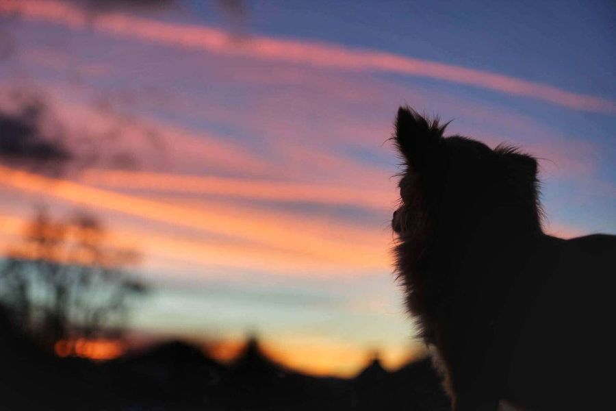 Sunset Chihuahua Colors Sunset Sky Silhouette EyeEmNewHere Colour Your Horizn