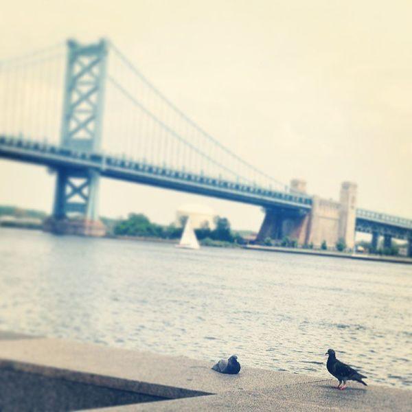 Chillin Birdgang Bridge Igers_philly Phillygram pigeons birds Philly Philadelphia river