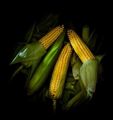 fresh corn from above | daylight foodphotography Black Background From Above  Green Nikon Vegetarian Food Contrast Corn Daylight Food Food Photography Foodphotography Fresh Healthy Eating Large Group Of Objects Moody Vegetable Yellow