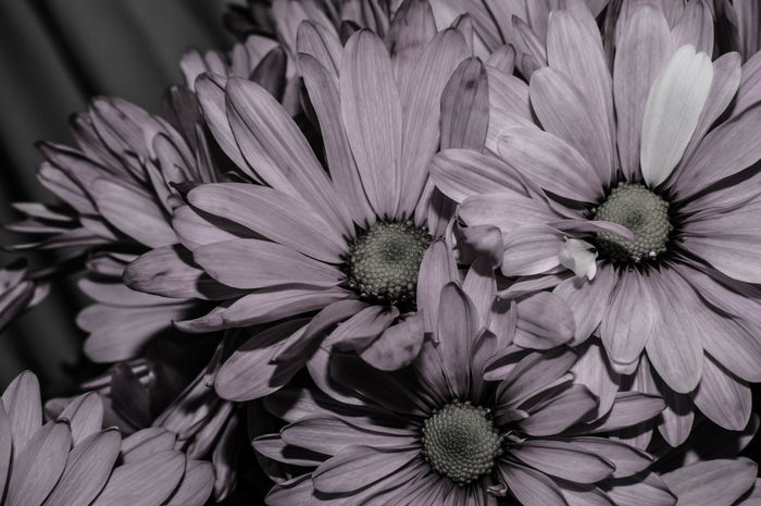 B&w Beauty In Nature Blackandwhite Blooming Close-up Day Flower Flower Collection Flower Head Fragility Freshness Growth Lowsaturation Nature Nature_collection No People Outdoors Petal Plant Visual Feast