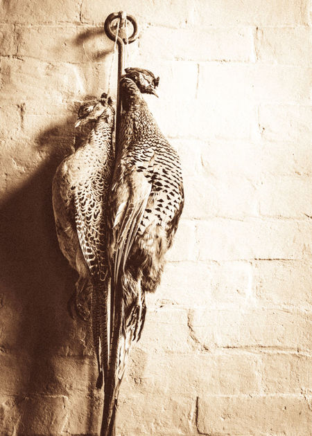 Two pheasants being hung ready for preparation to be eaten, Feathers Game Birds Hung Pheasants Being Hung Rural Two Pheasants Wall Animal Themes Bird Food Food Preparation Garden Kitchen Low Angle View No People Pheasants Traditional Food