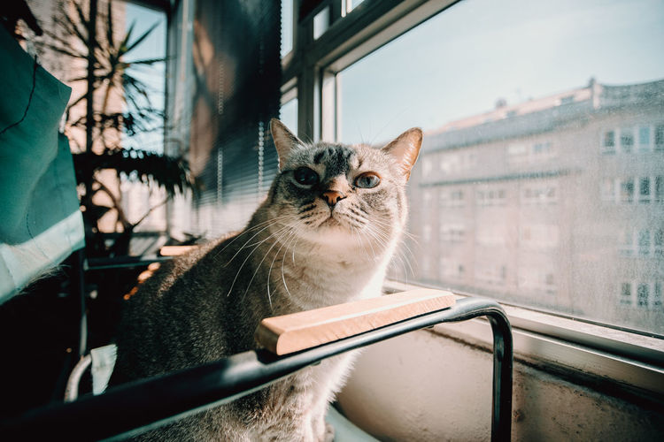 Portrait of a cat looking through window
