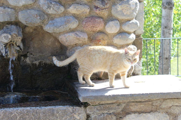 Golden cat Animal Themes Animal Photography Miau Golden Color Golden Cat Stripped Cat Fountain Drinking Fountain Memorial Memorial Place Pets Domestic Cat Feline Animal Themes Cat Kitten Domestic Animals Ginger Cat Young Animal