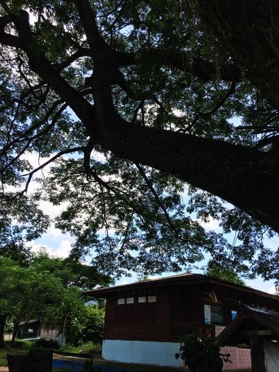 Architecture Tree Built Structure Building Exterior Plant Building Low Angle View Nature Outdoors Sky