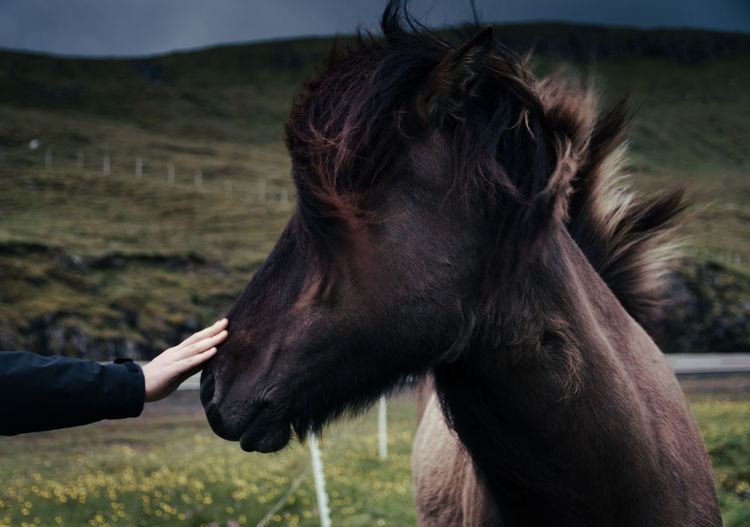 Beauty in the Faroe Islands Nature Mother Nature Beauty In Nature Natural Beauty Landscape Landscape Photography Sky Grass Cliff Cliffs Moody Sky Moody Islands Faore Islands Horse Horses Animals In The Wild Animals Animal Wildlife Wildlife & Nature Human Hand Interaction Moments Experiences Happiness Petting Animals