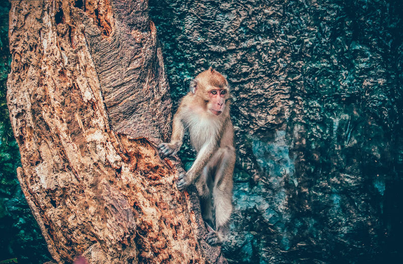 Monkey sitting on tree trunk
