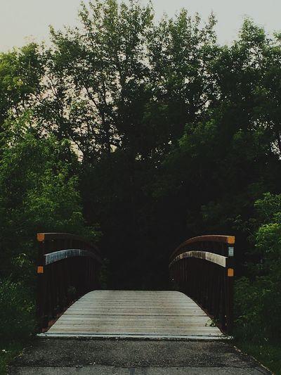 Tree Growth Nature Outdoors No People Day Bridge Nowhere Adventure Outside Rickety Bridge Rickety Ricketybridge Rickety Trees