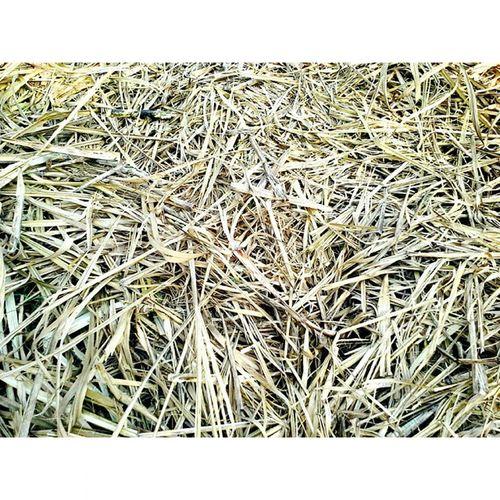 Drygrass Texture Eyeemfilter EyeEm