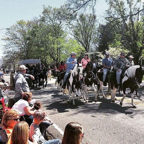 Muleday2015 Columbiatn Parade Tennessee Instagramtennessee
