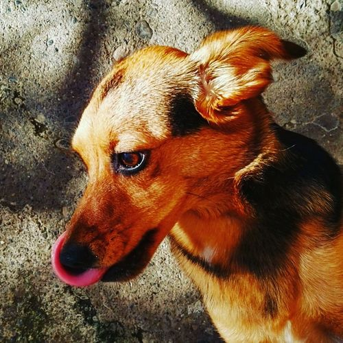 Dog Dogs Animal Animals Sun Tongue Out Catch The Moment Lingua Cane Cani Sole Pelo