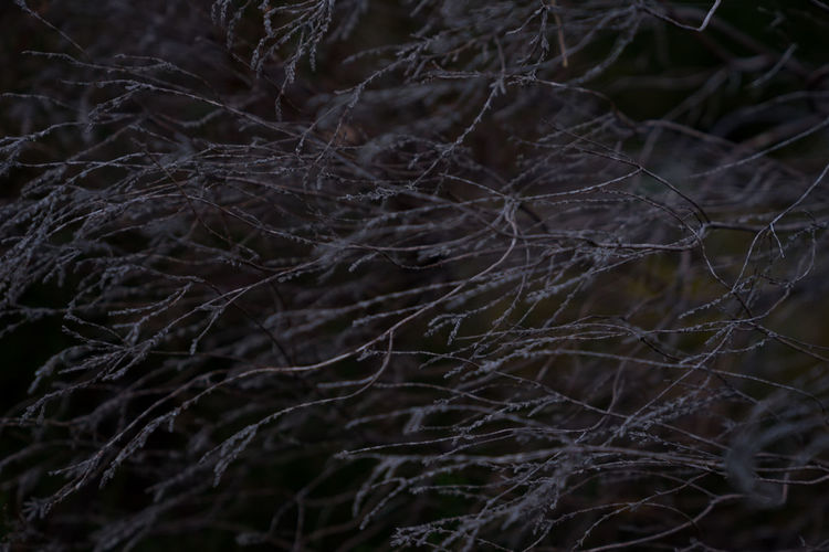 Close-up of bare tree at night