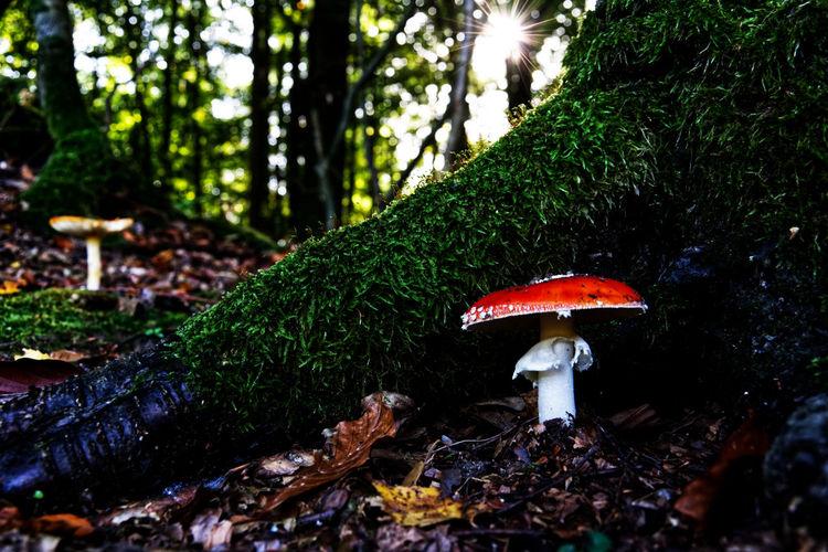 Fungus Plant