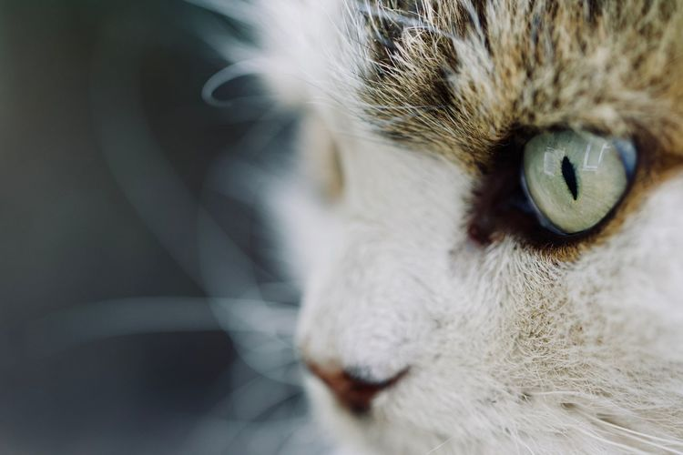 Close up of cat's eye Cat watching Grumpy Maine Coon Cat Moggy Persian cat Pet Love Pet Photography Pet Portraits Cat Watching Grumpy Maine Coon Cat Moggy Persian Cat  Pet Love Pet Photography  Animal Eye Cat Cat Eyes Cat Lover Cat Lovers Cat Photography Cat Portrait Close-up Domestic Domestic Animals Domestic Cat Feline Fluffy Fluffy Cat Grumpy Cat Pets Whisker