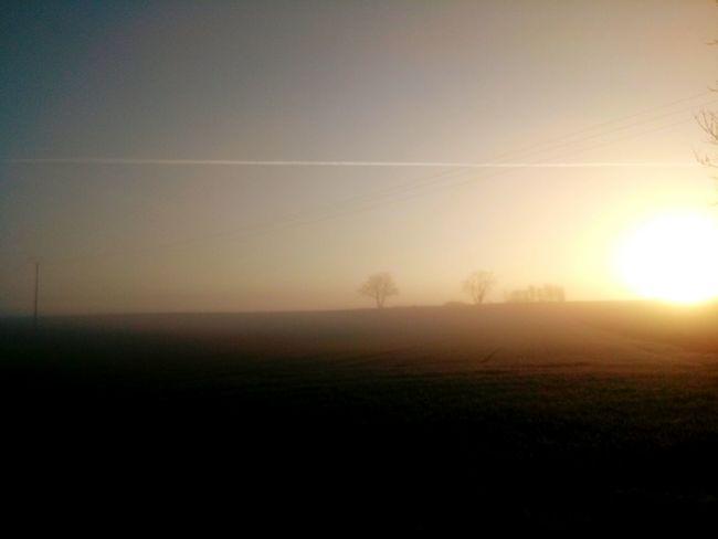 Tree Fog Sunset Dawn Sun Sunlight Field Agriculture Rural Scene Sky Streaming Majestic Silhouette Hazy  Sunrise Atmospheric Mood Calm Outline Mist
