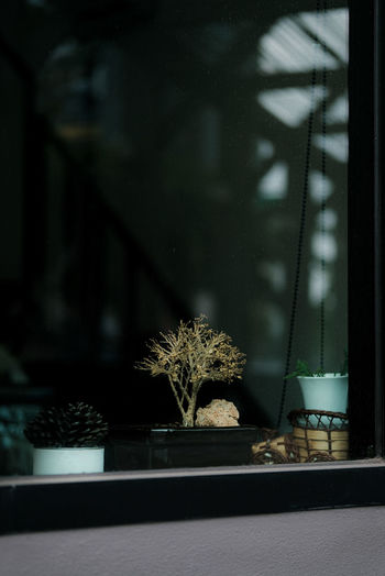 View of potted plant
