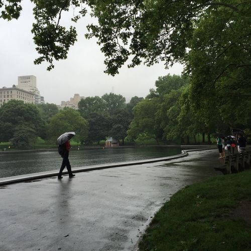 Relaxing at Central Park Leisure Activity Rain Rainy Days Lake Lake View New York City New York Umbrella