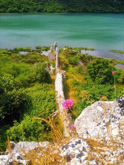 Butrint Day Grass Green Color Lake Nature No People Old Castle Outdoors Plant Rock Rock - Object Saranda Albania Tree